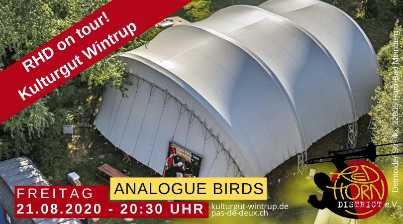 RHD on Tour - Musik im Zelt - Analogue Birds
